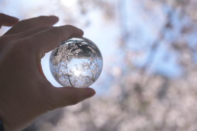 2020年の桜Pic&これから計画しているインテリア事業について